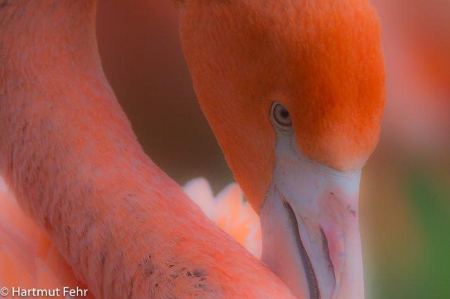 25_flamingo_01-12-17