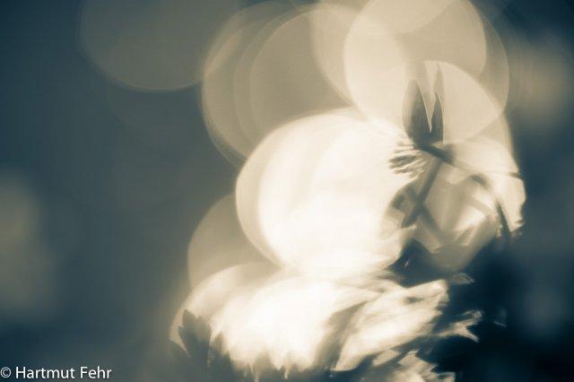 9_anemone-12042015