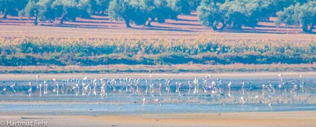 8_flamingos-1510
