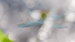 anemone-im-lichtermeer