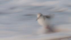k1_der-geist-des-sanderlings
