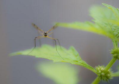 Insektenfotografie von Hartmut Fehr