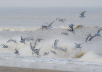 Vogelfotografie von Hartmut Fehr: Möwen am Strand