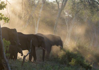 Im Elefantenwald - Foto des Monats Mai 2019 | Faszination Tierfotografie - Hartmut Fehr