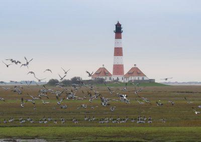Vogelfotografie von Hartmut Fehr: Gänseschwarm Westerhever