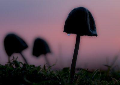 Pilze im Abendlicht | Faszination Tierfotografie - Hartmut Fehr