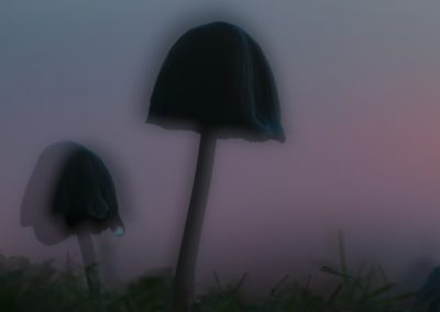 Pilzfotografie von Hartmut Fehr: Archaisch muten die Pilze im letzten Abendlicht an.