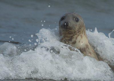 Neulich im Spaßbad | Faszination Tierfotografie - Hartmut Fehr