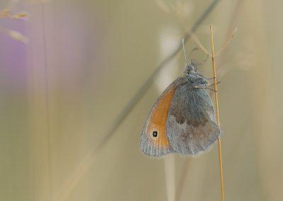 Makrofotografie von Hartmut Fehr: Zarter Schmetterling im hohen Gras.