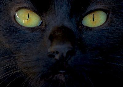 """Tara"" - Foto des Monats Dezember 2019 | Faszination Tierfotografie - Hartmut Fehr"